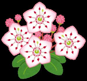 flower_kalmia_karumia